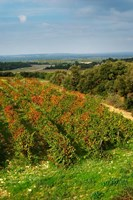 Chateau Romanin Vineyard, St Remy de Provence France Fine Art Print