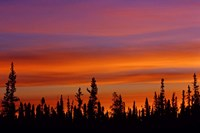 Sunrise Over a Boreal Forest Fine Art Print