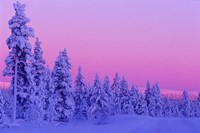 Winter Sunset in Finland Fine Art Print