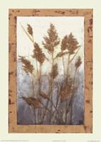 Plume Grasses Fine Art Print