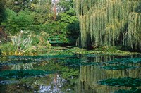 Claude Monet's Garden Pond in Giverny, France Fine Art Print
