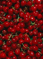 Cherries, Normandy, France Fine Art Print