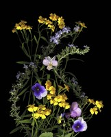 Pansy, Rosemary & French Tarragon Fine Art Print
