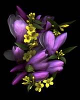 Tulip Magnolia & Jasmine Fine Art Print