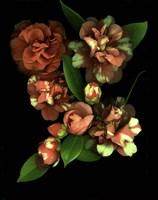 Camellia 3 Fine Art Print