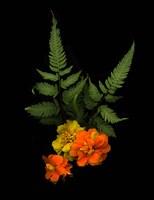 Ferns & Marigolds Fine Art Print