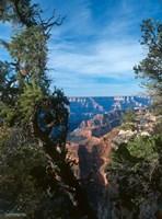 Grand Canyon E Fine Art Print