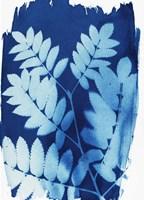 Leaf Silhouette II Fine Art Print