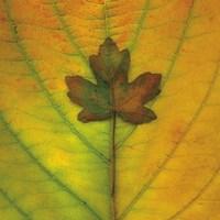 Leaf Inset Fine Art Print