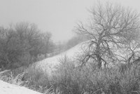 Winter Snow And Brush I Fine Art Print