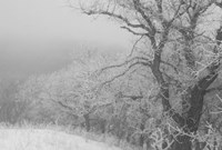 Winter Snow And Trees 2 Fine Art Print