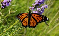 Shades Of Nature Orange Butterfly Fine Art Print