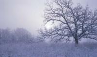 Snow Terrain Tree VI Fine Art Print
