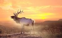 Elk Sunrise In The Badlands Fine Art Print