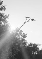 Flying Bird Silhouettes On Branches Fine Art Print