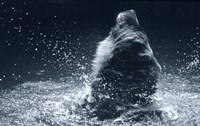 Grizzly Splash Fine Art Print