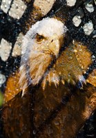 American Bald Eagle I Fine Art Print