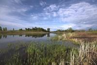 Blue Sky And Lake Landscape Fine Art Print