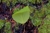 North Shore Curled Leaf Fine Art Print