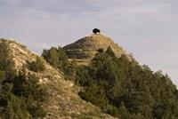 Bison On Mountain Fine Art Print