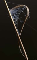 Web On Brown Grass Blade Fine Art Print