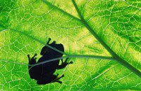 Frog Silhouette On Leaf Framed Print