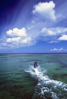 Dolphin Blue Water Swim Fine Art Print