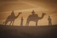 Camels In Desert Silhouette Fine Art Print