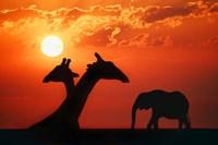 Giraffe Sunset Silhouette Fine Art Print