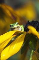 Frog Found Fine Art Print