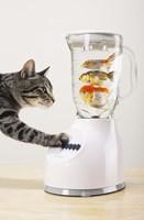 Cat's Fish Shake Fine Art Print