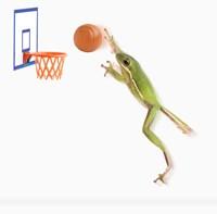 A Frog And His Basketball Fine Art Print