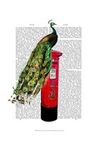 Peacock on Postbox Framed Print