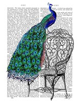 Peacock on Chair Framed Print