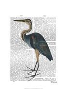 Blue Heron 3 Framed Print