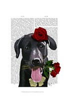 Black Labrador with Roses Fine Art Print