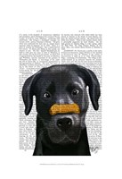 Black Labrador With Bone on Nose Fine Art Print