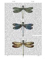 Dragonflies Print 1 Framed Print