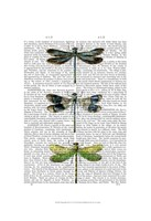 Dragonflies Print 2 Framed Print