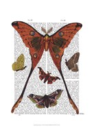 Moth Plate 1 Framed Print