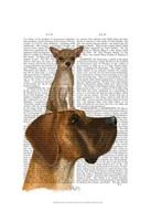 Great Dane and Chihuahua Fine Art Print