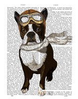 Boston Terrier Flying Ace Fine Art Print