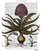 Vintage Hyacinth Fine Art Print