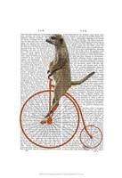 Meerkat on Orange Penny Farthing Framed Print