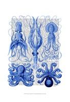 Octopus & Squid Blue Framed Print