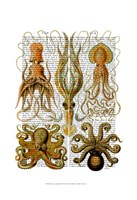 Octopus and squid Framed Print