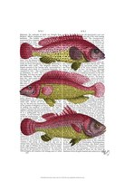 Red and Yellow Fantasy Fish Trio Framed Print