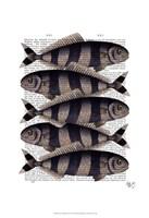Five Striped Fish Framed Print