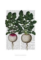 Radishes Print Framed Print