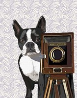 Boston Terrier Photographer Fine Art Print